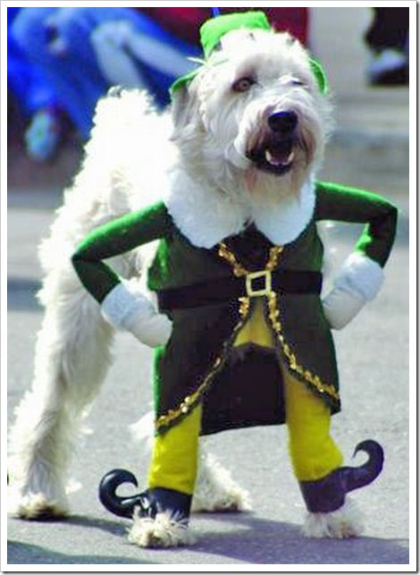 funny_dog_costume[2] : funny dog costumes  - Germanpascual.Com